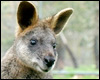 Wallabies and Methane